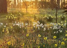 春天就是随处一看都有花朵的模样