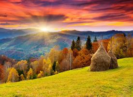 秋天金黄色落叶唯美图片欣赏