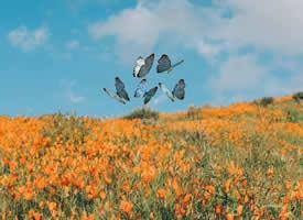最美四月天 遍山遍野都开满着鲜花