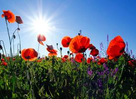 唯美绚丽的植物花卉图片桌面壁纸