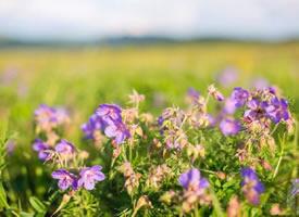 趁青春去看看山看看海,看看美丽的呼伦贝尔大草原