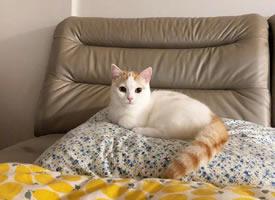 一只超级可爱生气了的小猫咪图片