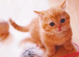 粉嫩可爱的小奶猫高清手机壁纸