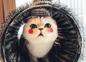 一组超级可爱的小猫咪图片欣赏