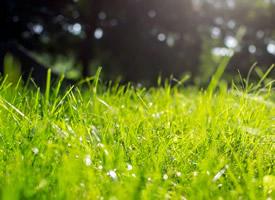 清新绿色树叶护眼高清桌面壁纸