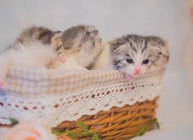 一组刚刚出生没多久的小猫图片欣赏