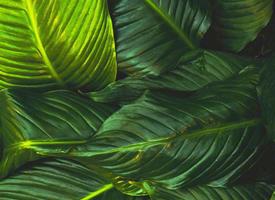 绿色植物清新手机壁纸欣赏