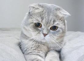 小萌猫,受不了这样萌萌哒的小眼神