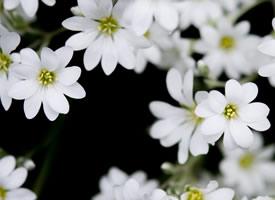 一组野外美丽的白色小花图片欣赏