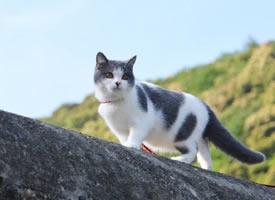 住在霓虹国的小猫咪ai酱图片欣赏