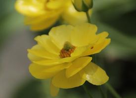 可爱黄色花卉高清桌面壁纸