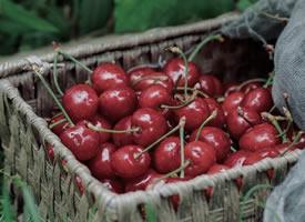 一组红红有人的樱桃图片欣赏