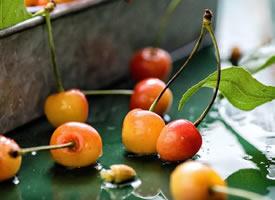一组超新鲜的晶莹剔透的樱桃图片