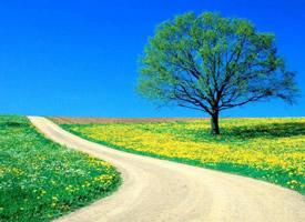 精选绿色风景高清图片壁纸
