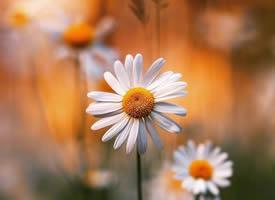 一朵花的凋零荒芜不了整个春天
