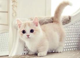 一只超级可爱卖萌的小猫咪图片
