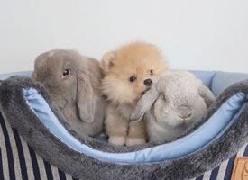 兔兔和小狗狗的快乐生活