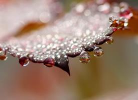 树叶上唯美的露珠图片欣赏