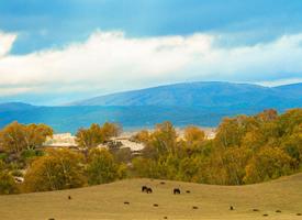 清新护眼的大草原风光图片欣赏