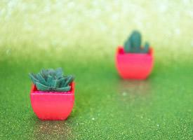 小清新绿色仙人掌植物唯美桌面壁纸
