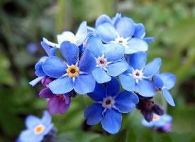 那一片幽静的蓝,恰恰是我爱的颜色