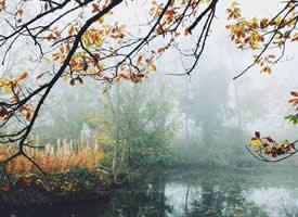 一组意境美的秋天落叶图片欣赏