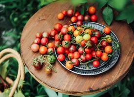 一组颜色好看酸酸甜甜的番茄图片