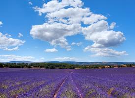 普罗旺斯唯美的薰衣草花海图片