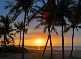 一组超美的椰林黄昏图片