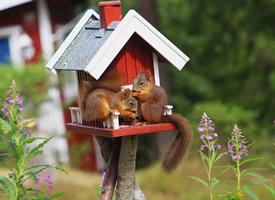 一组超级可爱的小松鼠图片