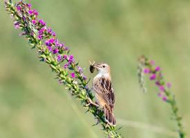 早起的鸟儿有虫吃的图片欣赏
