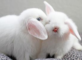 一组超级可爱萌系小白兔图片欣赏