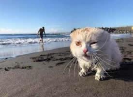 第一次去海边的猫咪,惊呆了