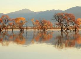 轻舞于水面的金黄柳树,定格出了最美的金秋画面  