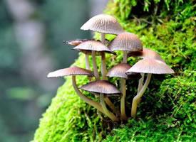 一组山上的野生小蘑菇图片