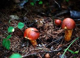 一组有点萌的小蘑菇图片欣赏