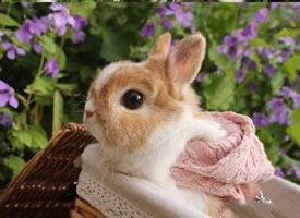 一组超级可爱呆萌兔兔Kate图片