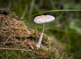 一朵朵可爱的小蘑菇图片欣赏