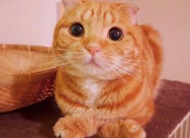 一组调皮可爱的橘猫图片