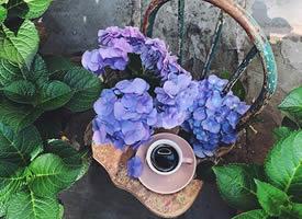 我们增长自己的智慧,是为了自己开一朵花