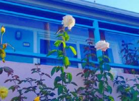一组清新养眼的蓝色背景壁纸图片