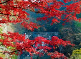 秋就是如此的一尘不染。 秋天的美,美在一份明澈