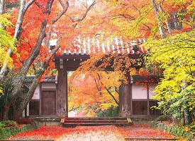 如有来生,我愿为树,一叶之灵,窥尽全秋