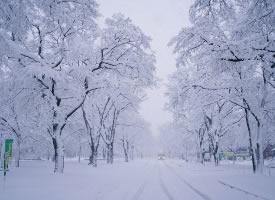 北海道大学的雪景