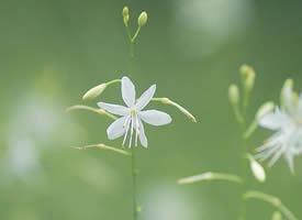一组小清新唯美的花卉高清图片欣赏