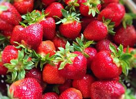 一组酸甜可口红红的草莓图片欣赏