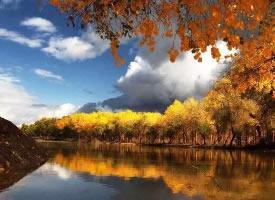 沙漠与胡杨,组合成了这世间最苍茫的绚丽