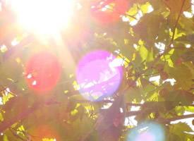 生命中,有风,有雨,但别忘了也会有阳光