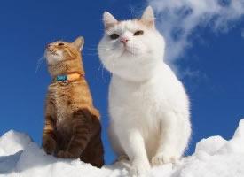 两只超级可爱的好朋友