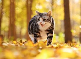 一组超美秋景肿美丽的小猫咪图片